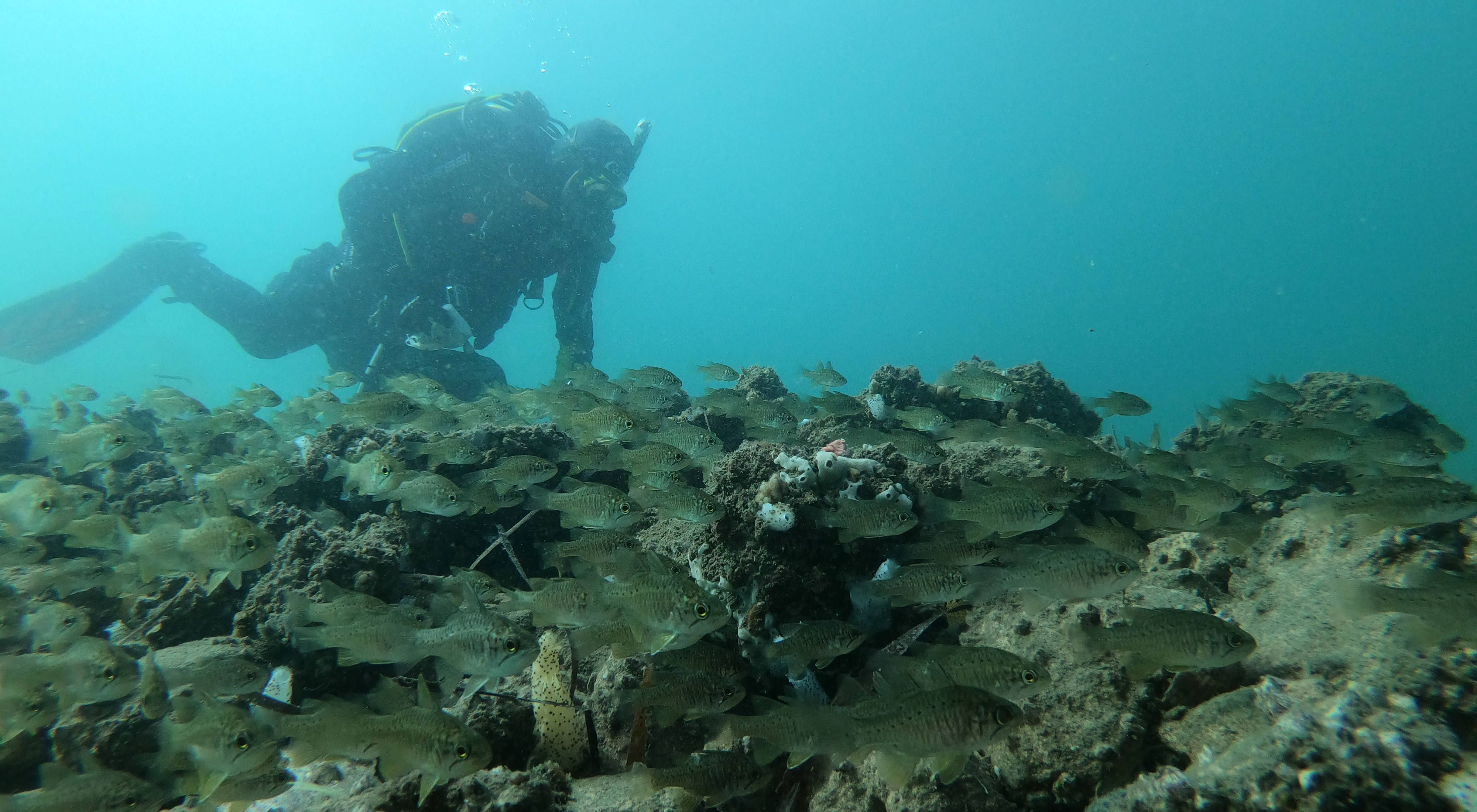 and a diver check out news reefs at Oyster Harbour, Albany