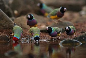 Image of: Know Exist The Nature Conservancy Australia Australias Endangered Animals
