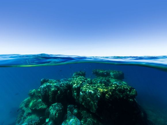 view of coral reef underwater