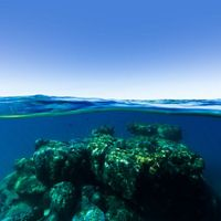 view of a reef