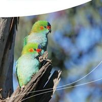 by BirdLife Australia and The Nature Conservancy