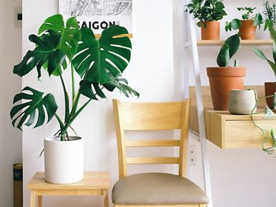 brighten up indoor spaces
