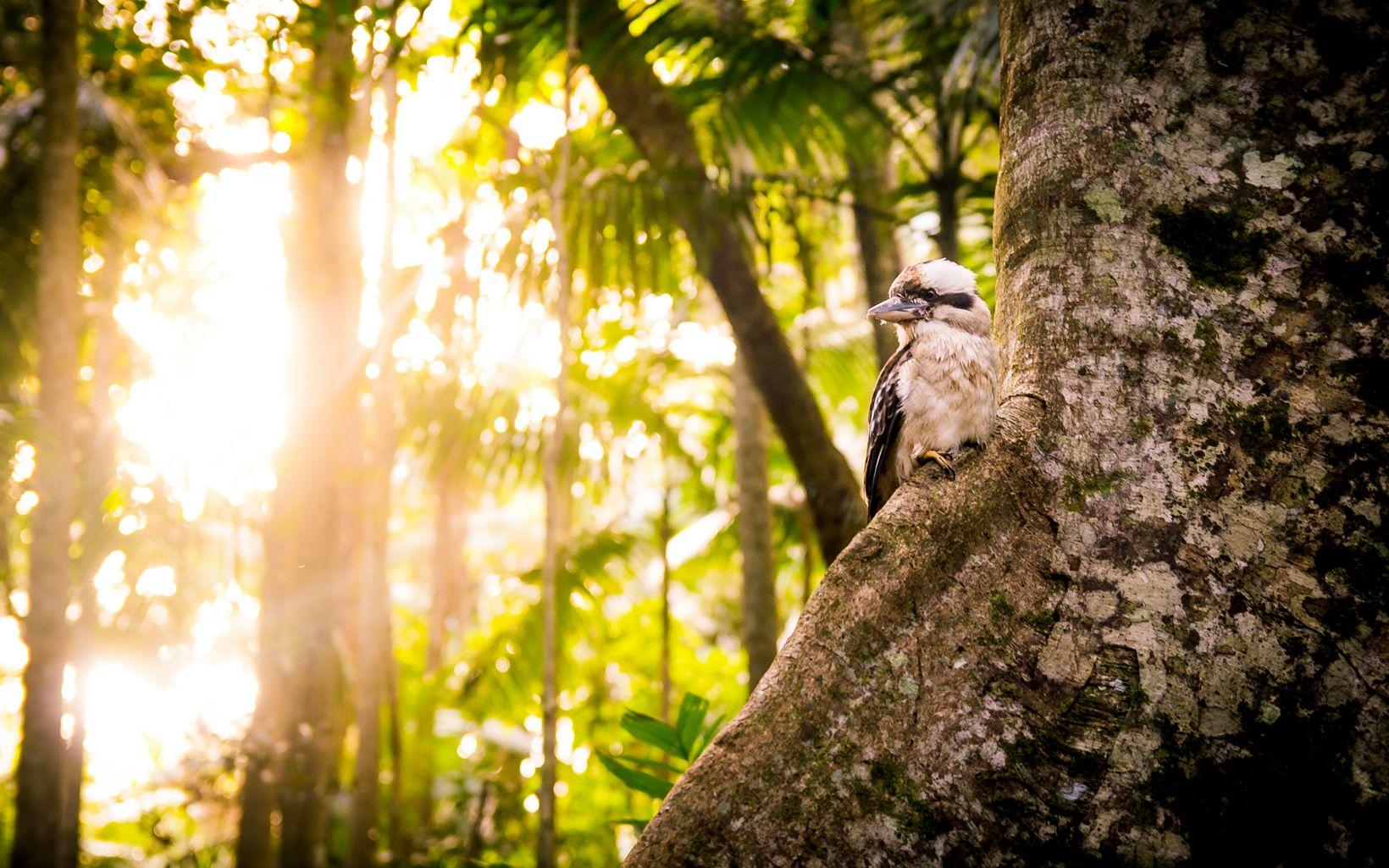 at Tamborine National Park, Queensland