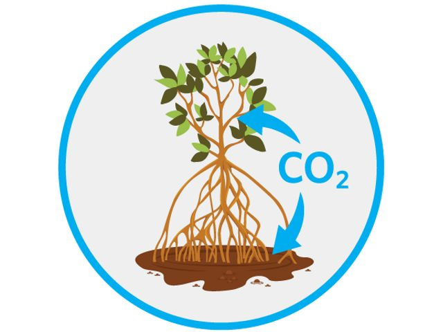 are among the most powerful carbon sinks on the planet