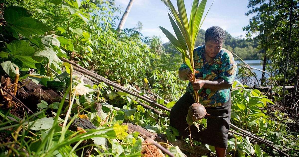 in Kia village, Isabel Province, Solomon Islands