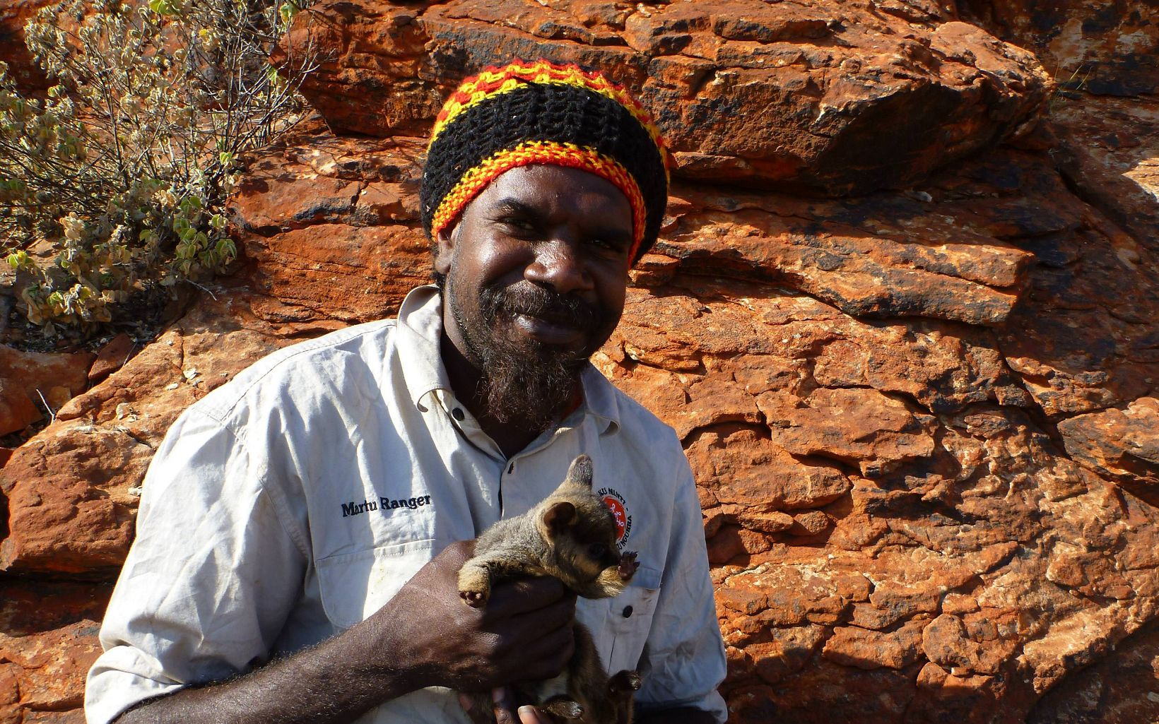with Warru (Black-flanked Rock-wallaby) joey