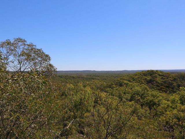 forested landscape under a blue sky