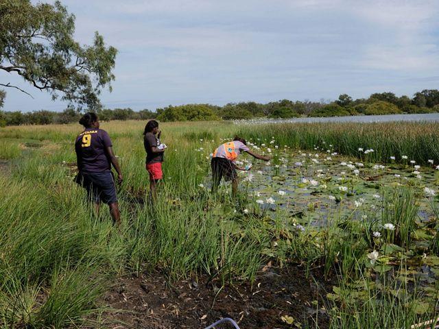Ngukurr Yangbala Rangers Pancey Wurramara, Joanita Gumbula and Kimberley Rogers testing water quality at Ngudjuli billabong in southeast Arnhem Land, NT