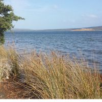 a grassy shoreline