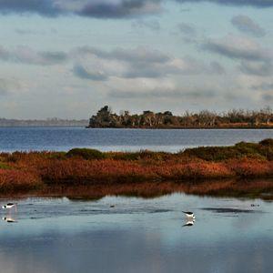 Peel-Harvey Estuary, WA