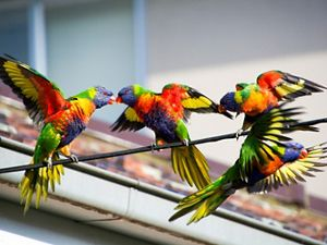 three brightly colored birds
