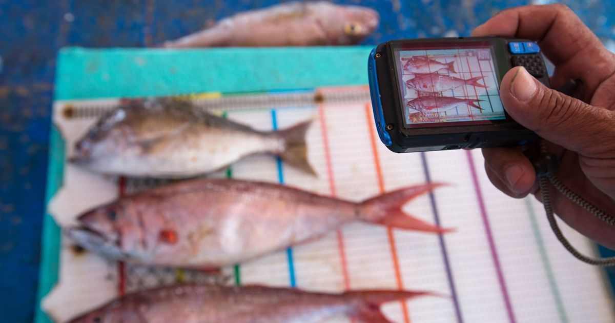 Fish caught by the fishermen on Tetap Setia, a boat participating in TNC's FishFace program, are photographed on a measuring board in Indonesia