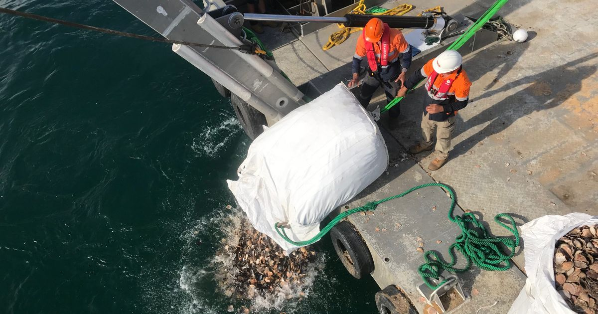 to rebuild oyster reefs