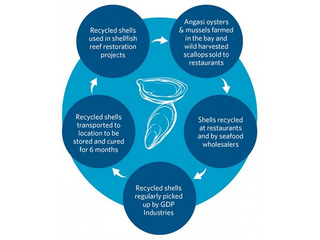 the process of using recycled shells for building new reefs