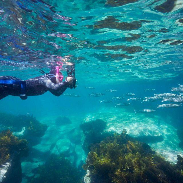 Snorkeller © Peter McGee