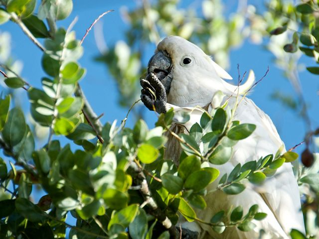 a white bird in a green-leafed tree