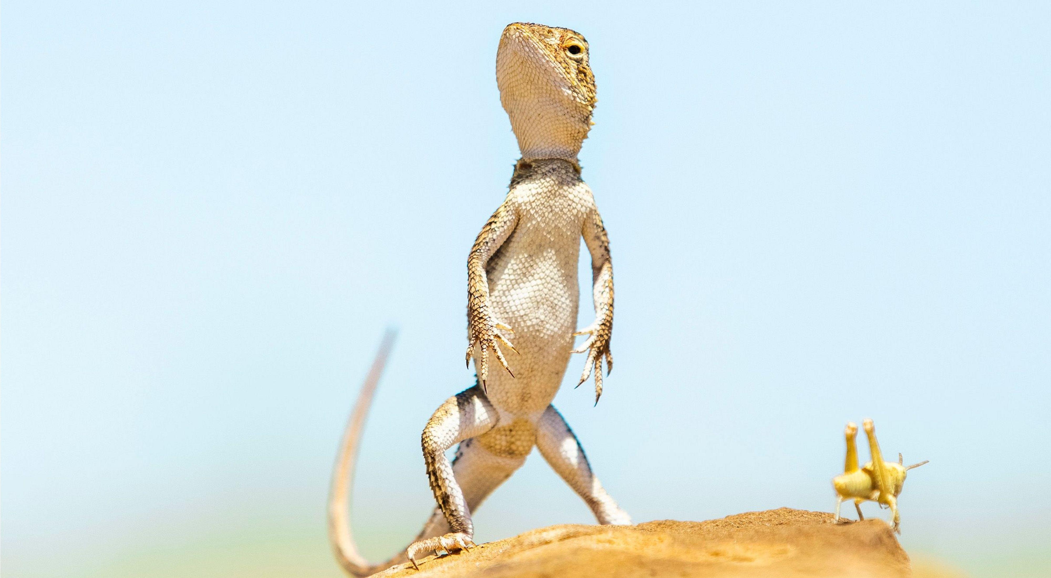 lizard and hopper