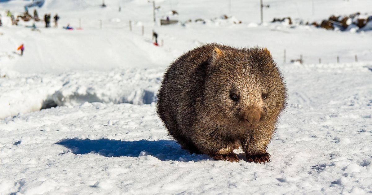 in Ben Lomond National Park, Tasmania