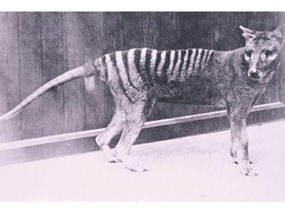 at Hobart Zoo 1930s
