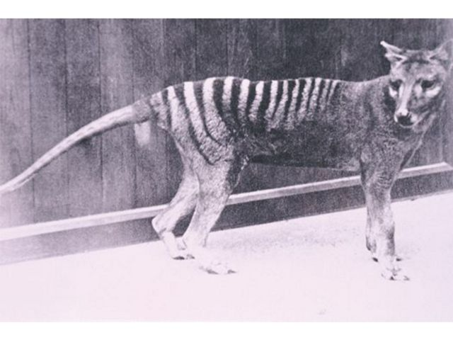 at Hobart Zoo 1930s