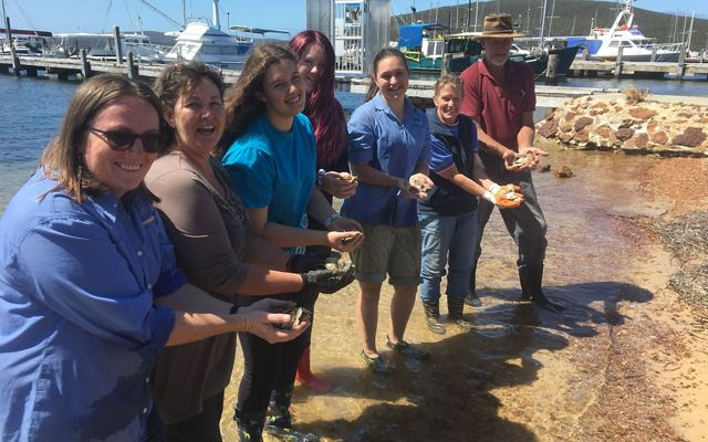 with newly cleaned oysters in preparation for a new shellfish reef at Albany, Western Australia