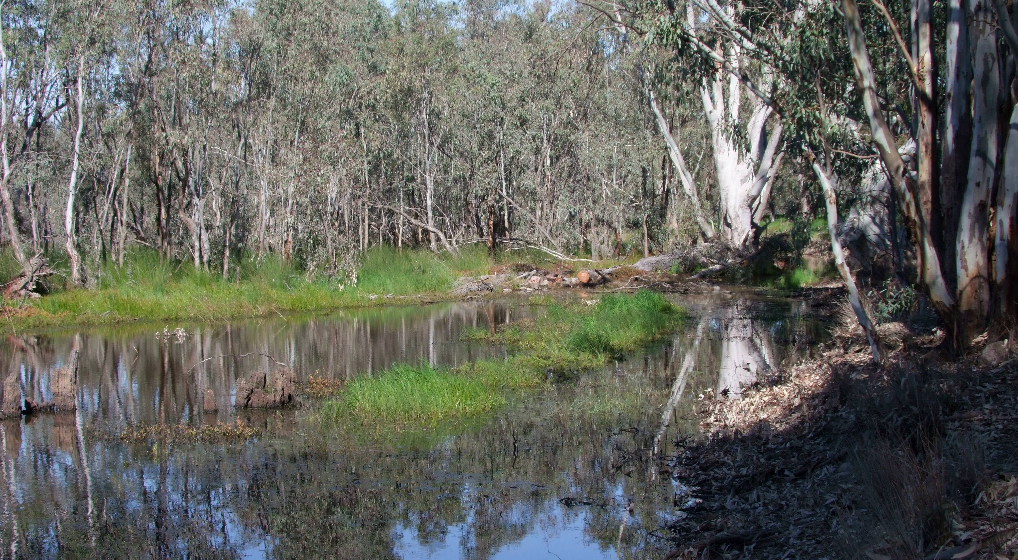where TNC had a purposeful flooding supported by the Murray-Darling Basin Balanced Water Fund