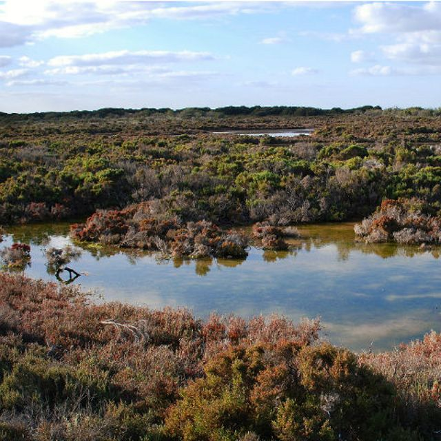 Adelaide International Bird Sanctuary during winter © Department for Environment and Water
