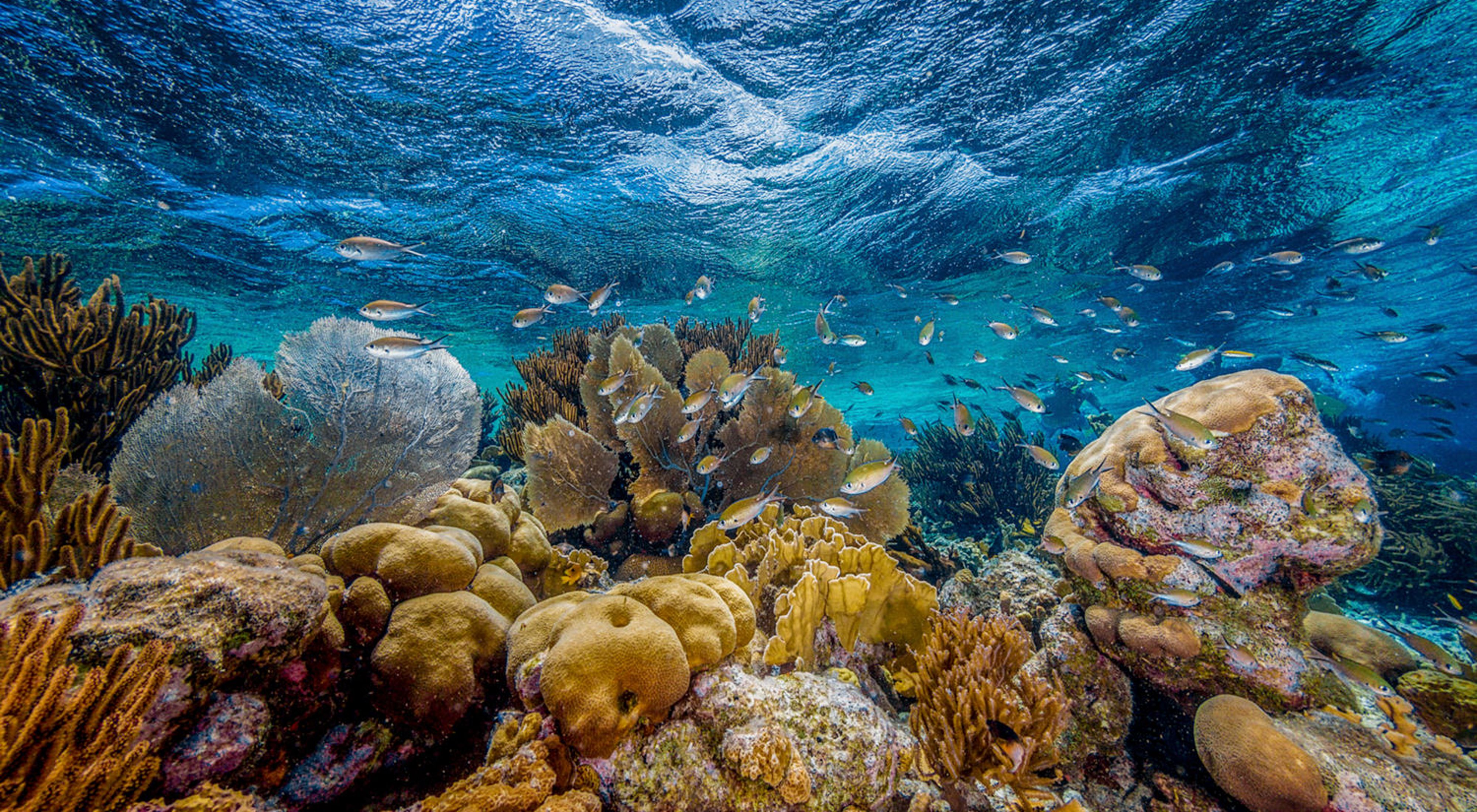 A coral reef in shallow water off of the Dutch island municipality of Bonaire in the southern Caribbean. This photo was entered into TNC's 2019 Photo Contest.