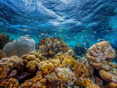 Thriving coral community