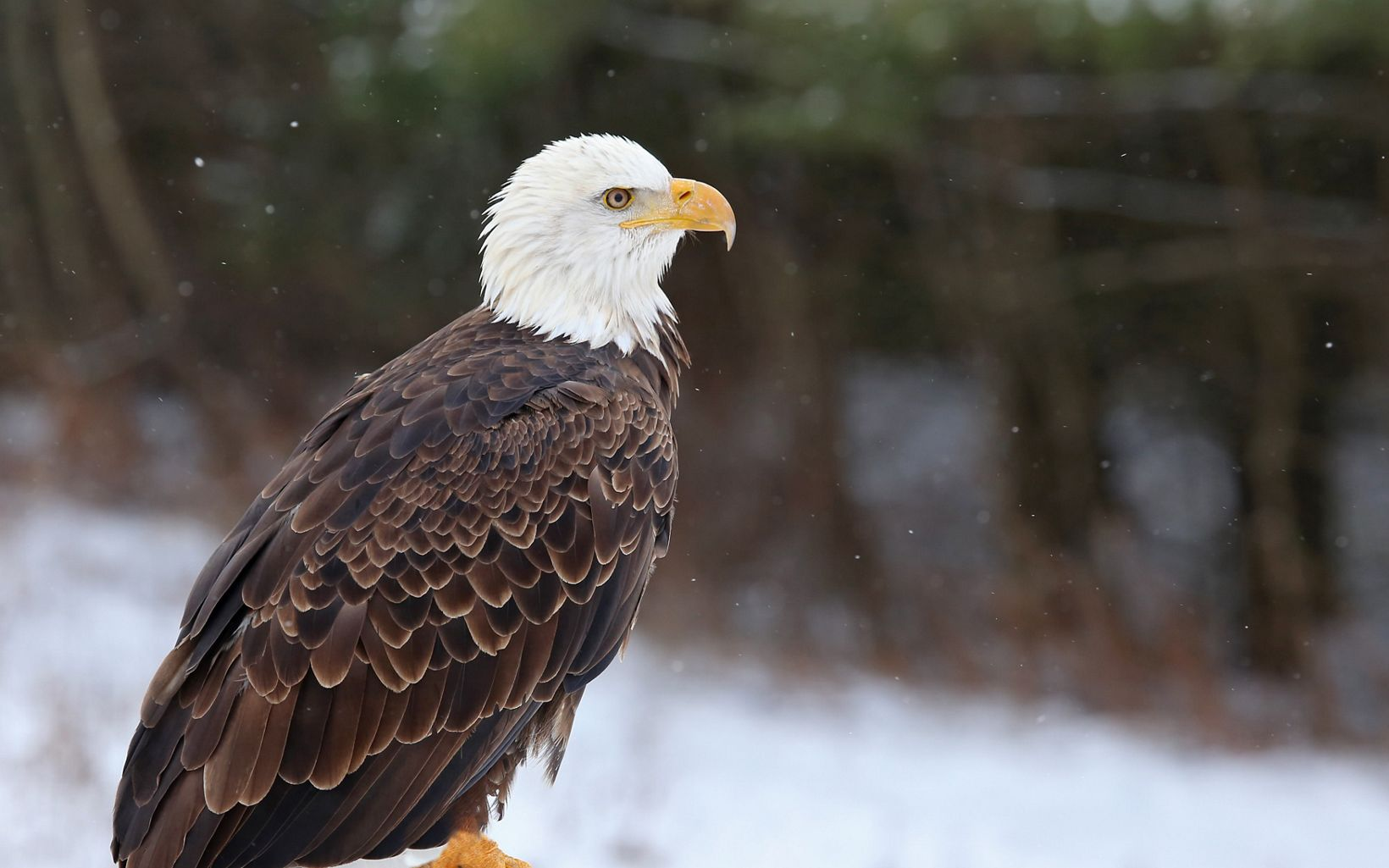 A bald eagle is sitting on a post surrounded by snow.