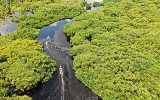 aerial view of a black river with two small motor boats snaking through a tropical forest