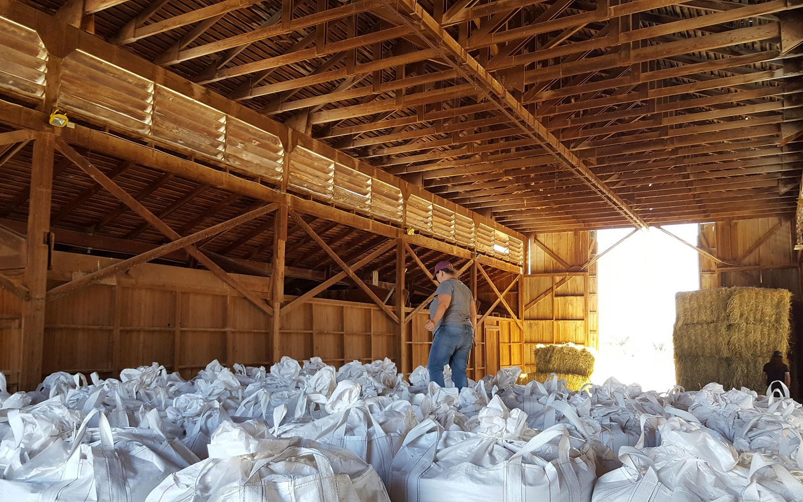 Kim Schonek amidst bags of barley ready for malting at Sinagua Malt.