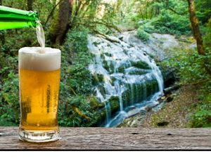 If you like beer, you should love forests.