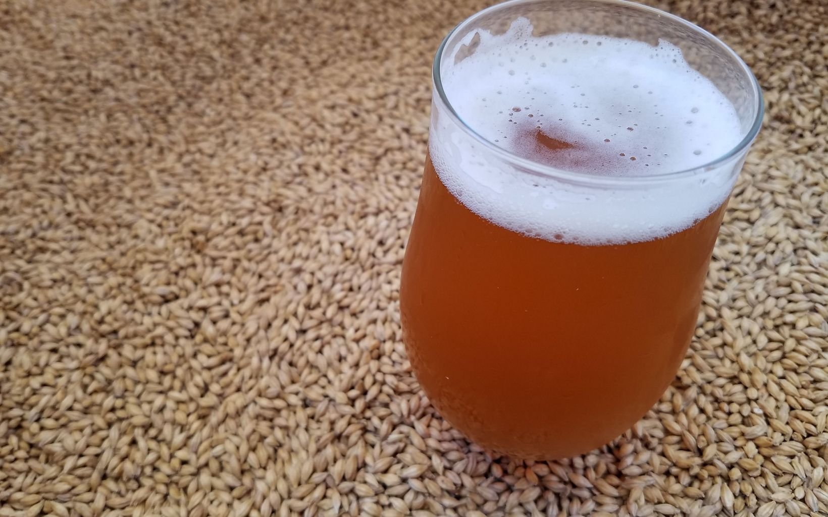 Local craft beer from barley grown at the Shield Ranch, and malted at Sinagua Malt in the town of Camp Verde.