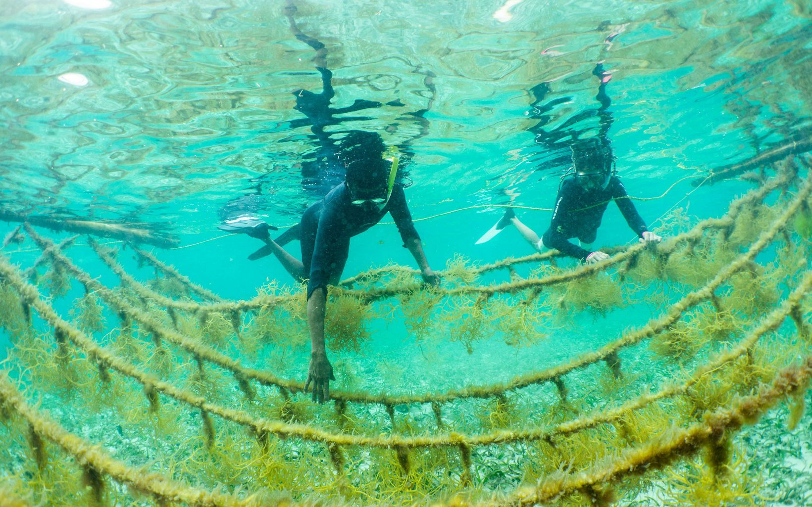 Mariko Wallen and Louis Godfrey tend to the seaweed on their farm in Placencia, Belize.