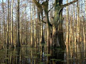 The Big Woods of Arkansas is the largest remaining block of bottomland hardwood forest north of Louisiana's Atchafalaya River.