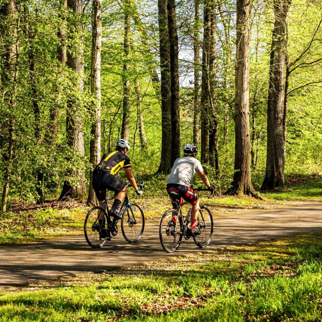 two cyclists on a bike path surrounded by green trees