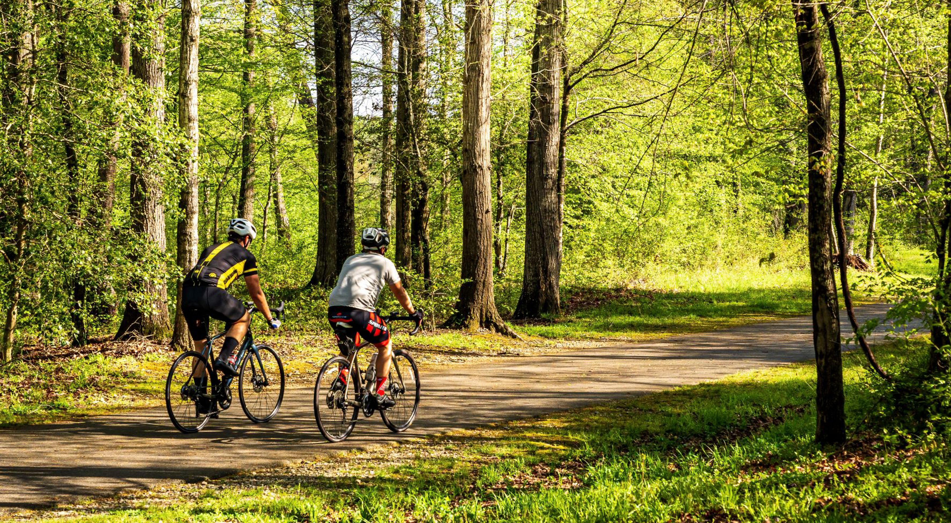 two men biking through a forest-covered trail