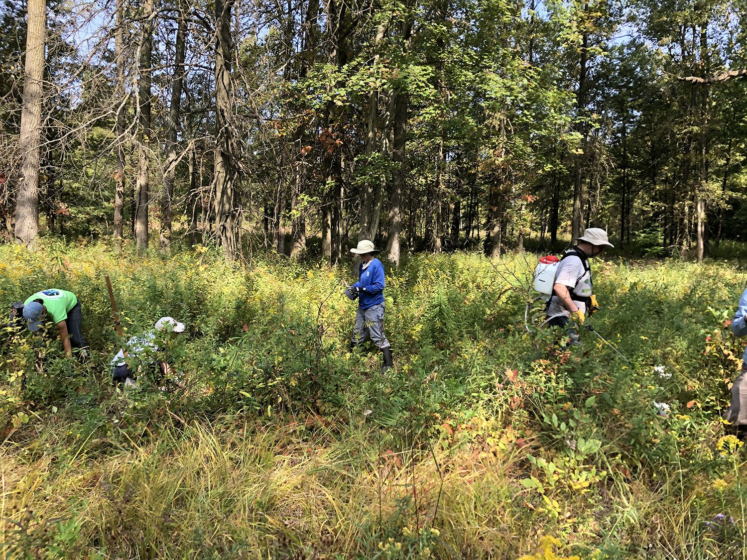 Four people, standing and crouching in a grassy field, placing native plants in the ground.