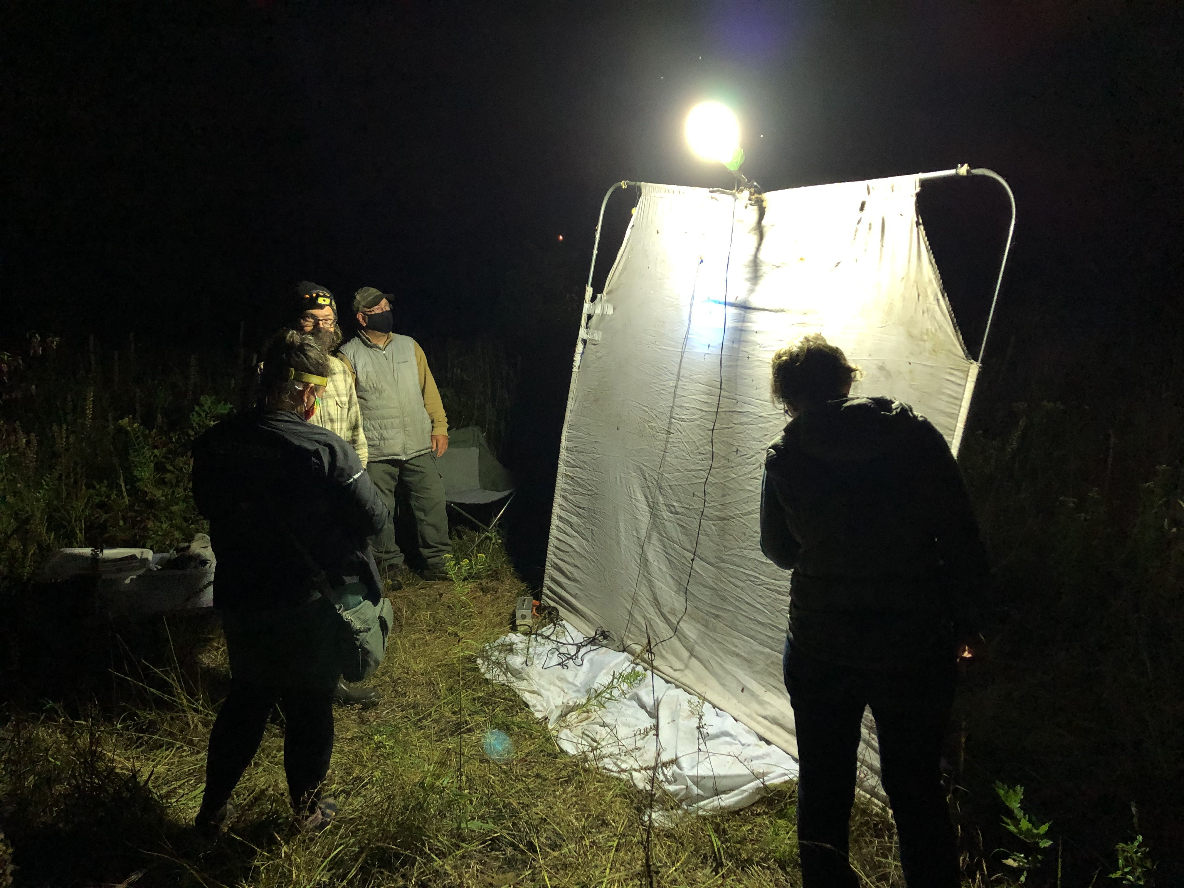 Four people stand in the dark around a white sheet, a light shines down on the sheet, attracting insects.