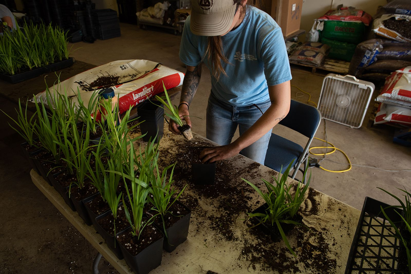 A person in a blue shirt stands at a table and plants smaller into larger pots of soil.