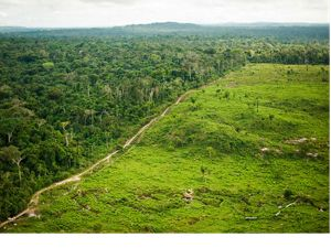 An aerial view showing deforestation for cattle ranching at São Félix do Xingu, a municipality in the Brazilian Amazon, that has one of the highest rates of deforestation in the country. Understanding that conversion to agriculture and cattle ranching is the greatest threat to the Amazon rainforest, the Conservancy works in strategic municipalities of the Brazilian Amazon such as São Félix do Xingu to implement strategies to control deforestation and promote the responsible production of soy and beef among farmers and ranchers. São Félix do Xingu is also one of the focal areas for the Conservancy's work on demonstrating how REDD programs can work on the ground.