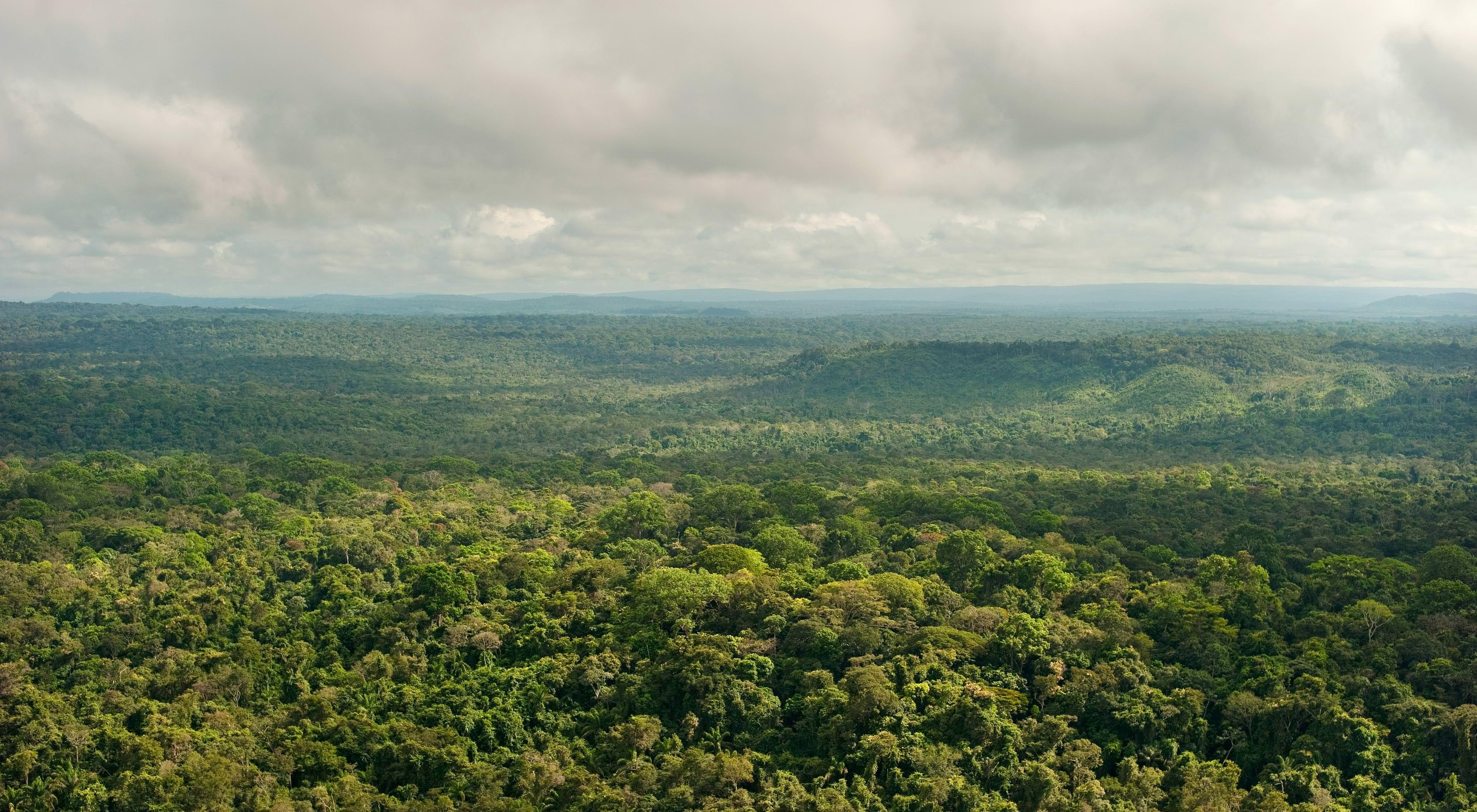 Vista aérea de uma região de floresta preservada em São Félix do Xingu-PA.