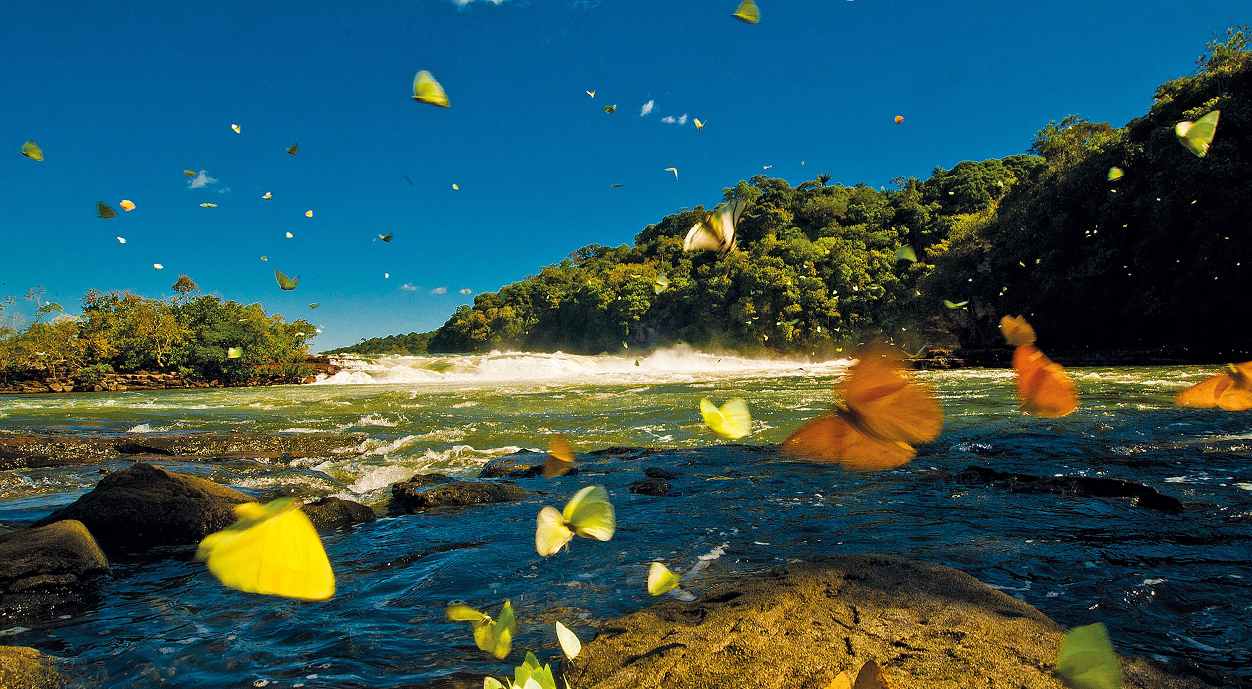 Borboletas na margem do Rio Juruena, na Bacia do Tapajós, na Amazônia.