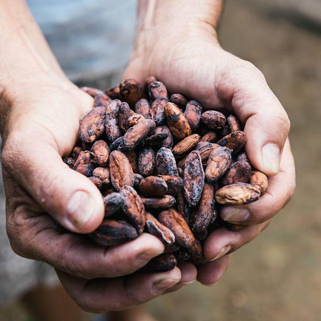 agricultor muestra un puñado de semillas de cacao