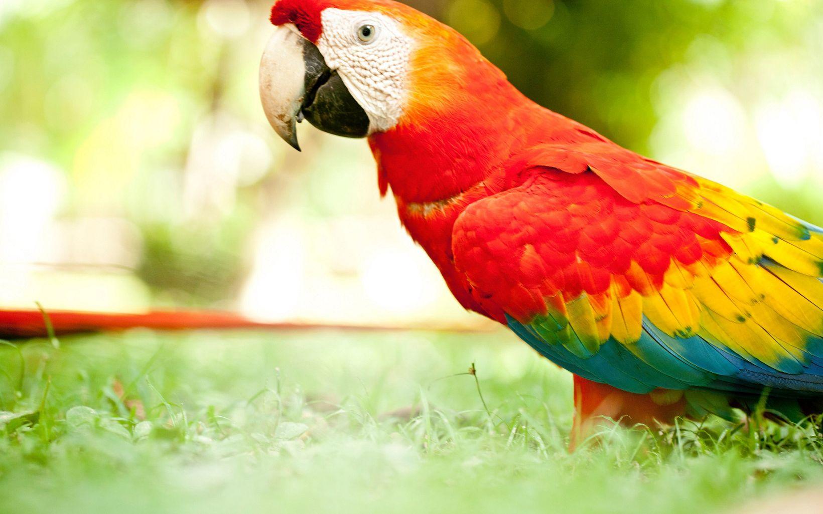 En la Amazonia de Brasil.