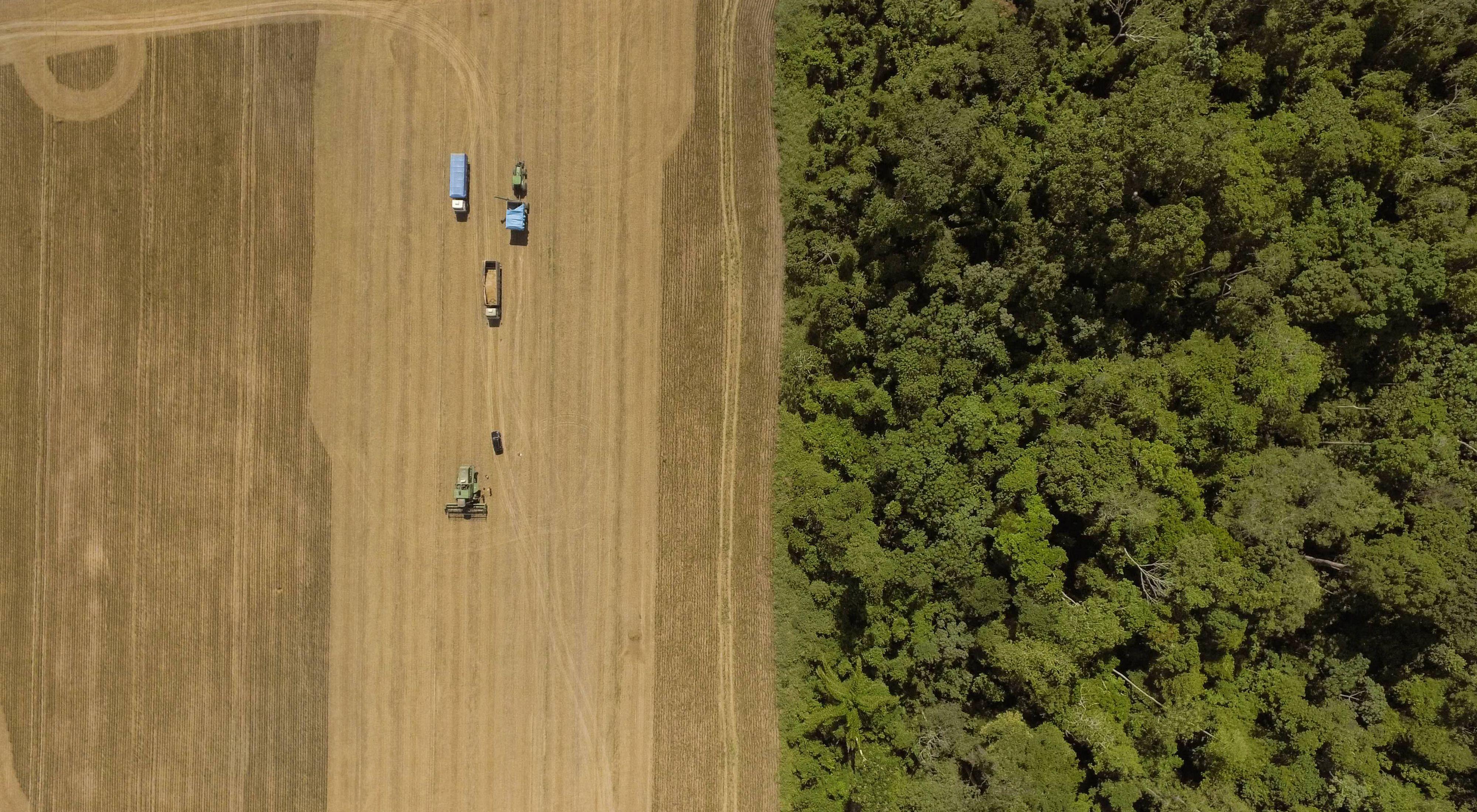 plantação de soja em Brasil