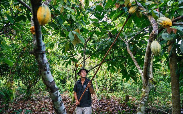 Farmer in Amazon