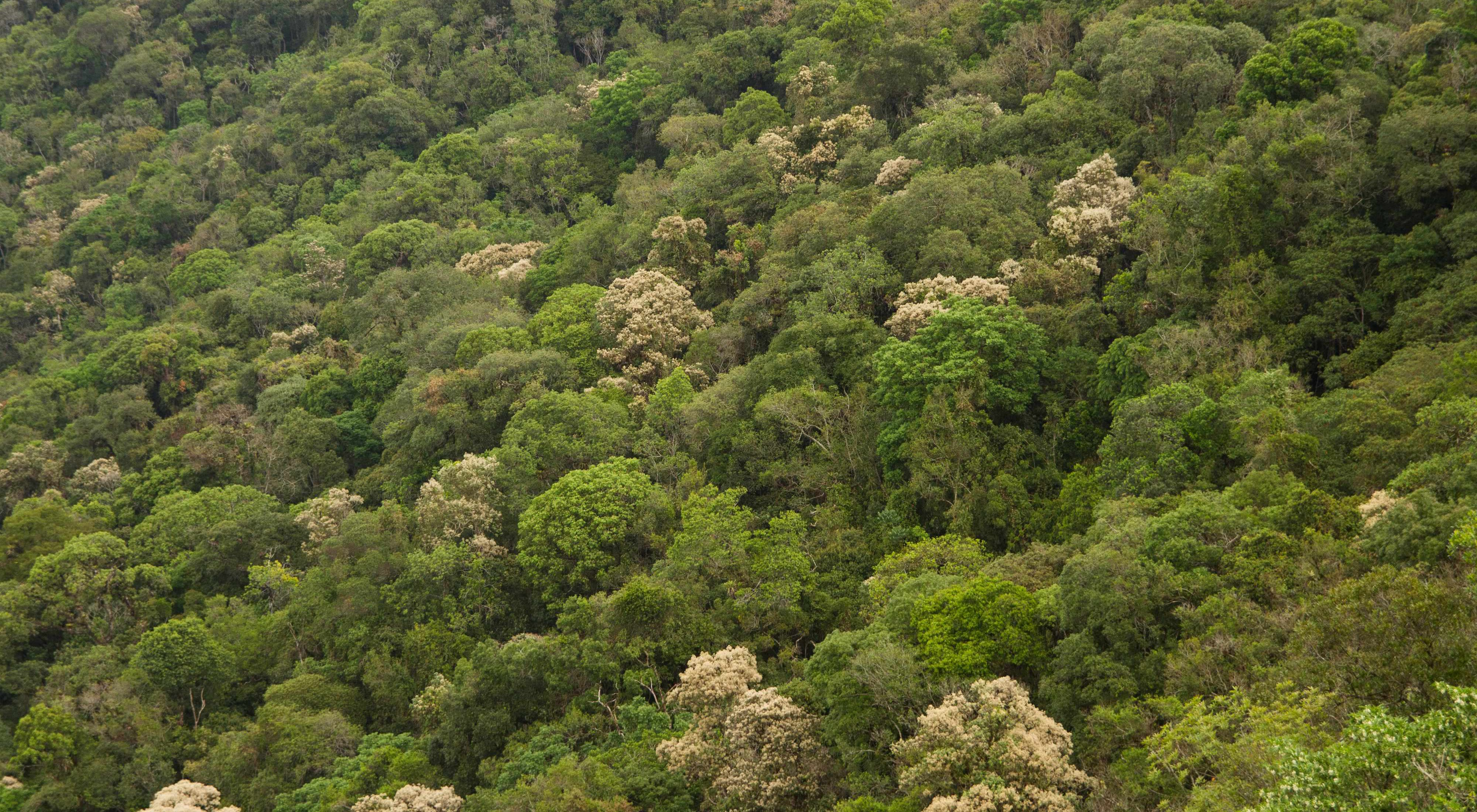 Floresta nativa na Mata Atlântica