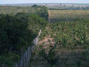 Produção  sustentável l no Cerrado
